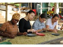Ein Kaffee, der Schule macht. Louisenlunder Schülerinnen bei der Arbeit auf der Plantage Gitesi