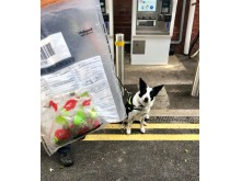Drugs dog search Burnham station