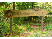 Waldgeisterweg im Greifensteinwald