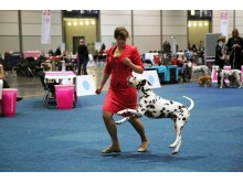World Dog Show 2017 - Training