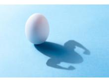 Ägg och protein