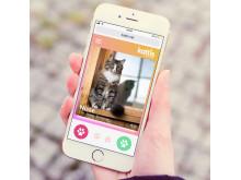 Kattis – en ny digital tjänst för att matcha med hemlösa katter