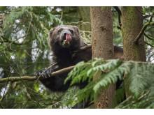 Bijzondere beelden van meest bedreigde diersoorten in Europa