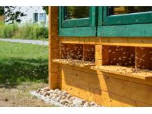 Auch die Therapie mit Bienenstockluft (Apitherapie) ist Thema in Thermalbad Wiesenbad