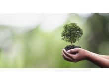Hände geben behutsam einen Baum weiter