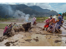 2694_1346570_0_© Pranishan Rajbhandari , National Awards, 2nd Place, Nepal, 2019