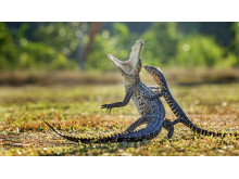 Copyright Hendy Lie, Indonesia, Entry, Open, Nature and Wildlife, 2016 SWPA