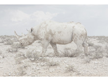 Land of Nothingness, fot. Maroesjka Lavigne