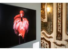 Sony World Photography Awards @ Villa Reale di Monza