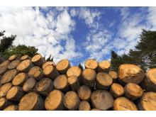 Skogsråvaror och Biomassa