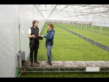 Nu inleds AI-styrd odling i Svegros växthus ute på Färingsö för att optimera resursförbrukningen.
