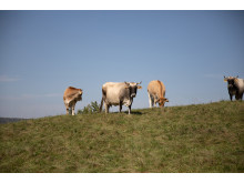 Living Farms Goetheanum Gartenpark Garden Park Kuehe Cows_Jasmin Peschke