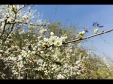 Blüten im Fläming