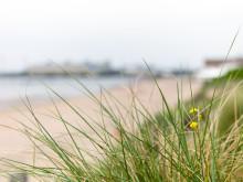 Ett helt nytt område kommer att utvecklas på Skansen i Simrishamn, nära både stad och hav.