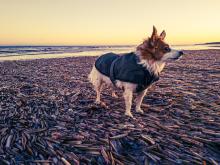 Holkham Beach 6 - Sony Xperia 5 II