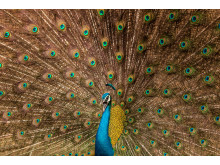 © Satvik Bhatt, India, Entry, Open, Wildlife, 2017 Sony World Photography Awards