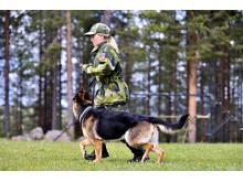 BHK Malmen – anrik hundklubb i Gällivare