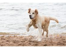 Badande hund