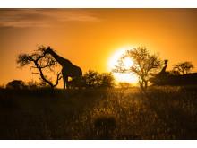 Alphaddicted_Roadtrip Namibia_04