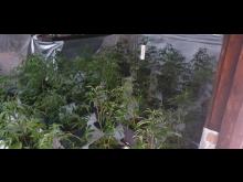 Plants seized [4]