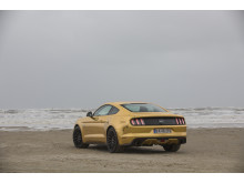 The Golden Mustang