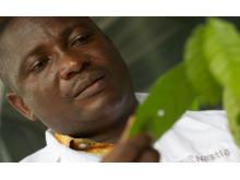 Forskning och utveckling bakom högkvalitativa kakaoplantor