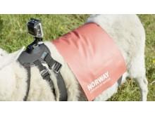 Каждой овце по GoPro!