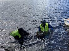 Alingsås dykarklubb röjde i Mölndalsån