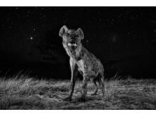 Will Burrard-Lucas, Spirit of the Night