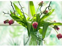 Trender 2017 - vegogarden med tulpaner