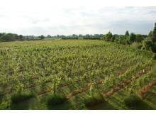 Wijngaarde De Rijsakker