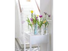 Tulpaner i många vaser