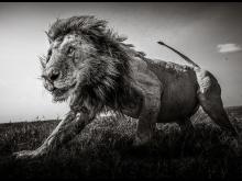 © Graeme Purdy, United Kingdom, Finalist, Professional competition, Wildlife _ Nature, Sony World Photography Awards 2021_1.jpg
