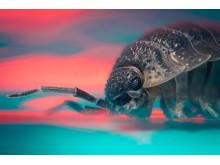 Maasiira