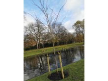 Ahoghill Traders and Council sow seeds of international friendship at Regent's Park tree planting ceremony