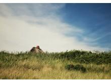 Charmant, nützlich, nachhaltig: Reetdächer auf Sylt