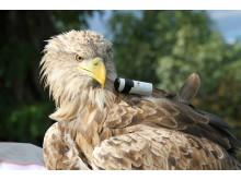 HDR-AZ1 Eagle