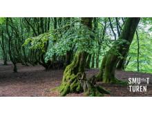 Smutturen - Troldeskoven