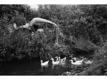 Martin Parr / Magnum Photos / Rocket Gallery