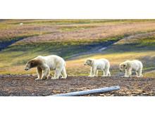 Complete-Spitsbergen-Expedition_Illustration-Photo_Edge-Island©Rigmor-Sand