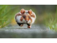 ® Julian Ghahreman-Rad, Austria, Entry, Open, Nature & Wildlife, 2016 Sony World Photography Awards