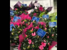 Azaleor märkta med Victorias fond-sigillet i blått stödjer kampanjen