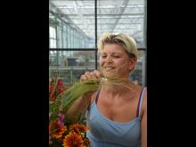 Trädgårdsmästare Neringa Krisciuniene på Ingla Blommor odlar Trädgårdsfägring