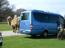 Destinationen in Dänemark – Knuthenborg Safaripark