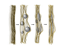How the researchers mimicked natural bone formation
