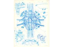 Det centrala nervsystemet, Gustaf Retzius (1842-1919) Biologische Untersuchungen. Neue Folge. Vols.- I- XIX, (Stockholm, 1890-1922)