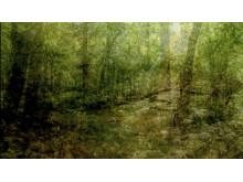 Vita Kuben/ Nico Vascellari/ Hymn