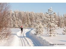 Harsa är vida känt för sina välpreparerade skidspår. Ett längdparadis endast 3 timmar från Stockholm