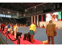 World Dog Show 2017 - Im Showring
