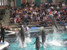 Delfinarium im Zoo Duisburg
